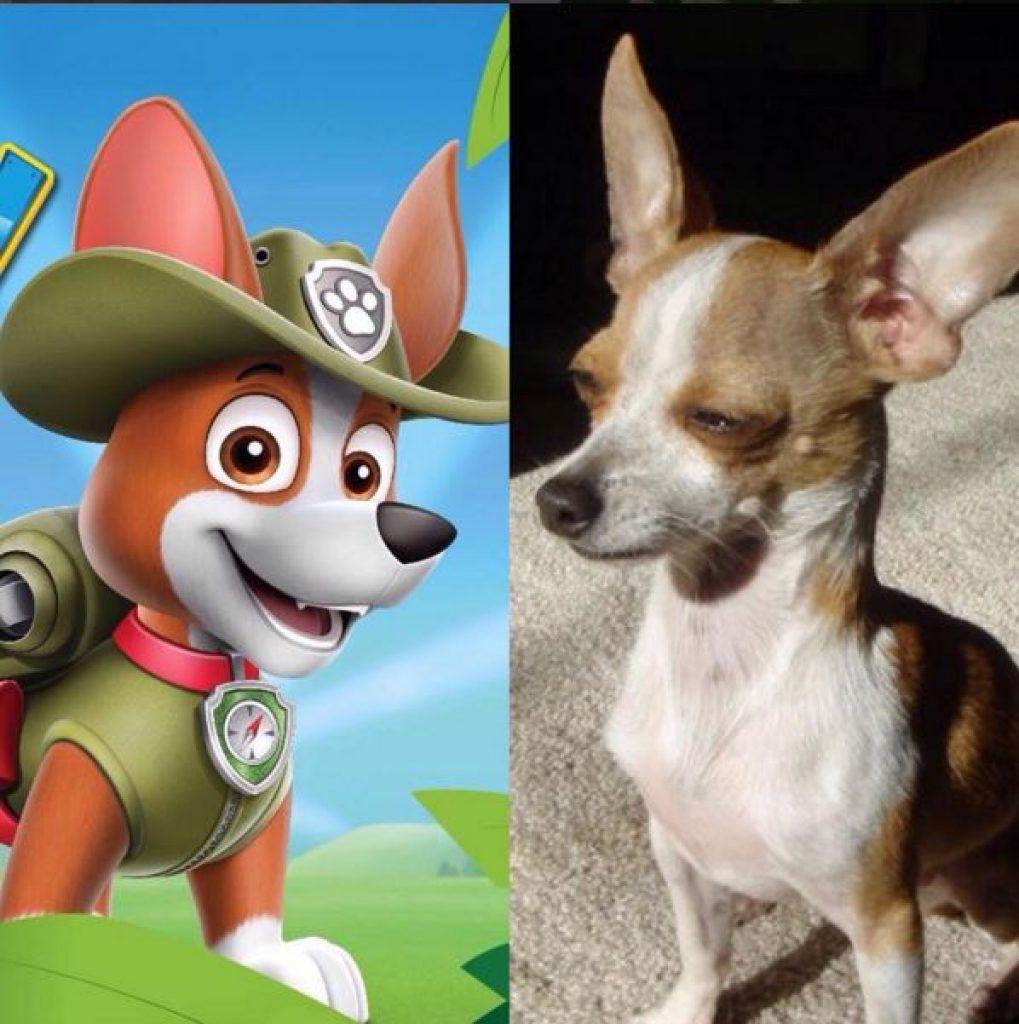 tracker-nuevo-perro-patrulla-canina